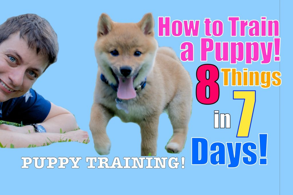 How to Train Your Puppy 8 Things in 7 Days! (STOP Puppy Biting, Come, Stay… )