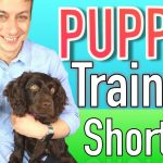 The Puppy Training Shortcut: Clicker Training Explained