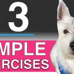 3 Training Exercises You Can Do With Your Dog (In depth puppy training)