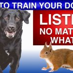 How To Train Your Dog To Listen No Matter What!