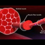 Know Your Muscle, Grow Your Muscle - GeorgeHealth.com
