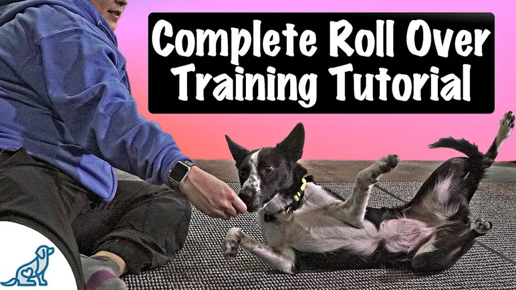 How To Teach Your Dog To Roll Over – Professional Dog Training Tips