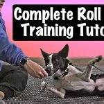 How To Teach Your Dog To Roll Over - Professional Dog Training Tips