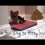 Potty Training Your Dog 101   Indoor Potty Training   Part Two