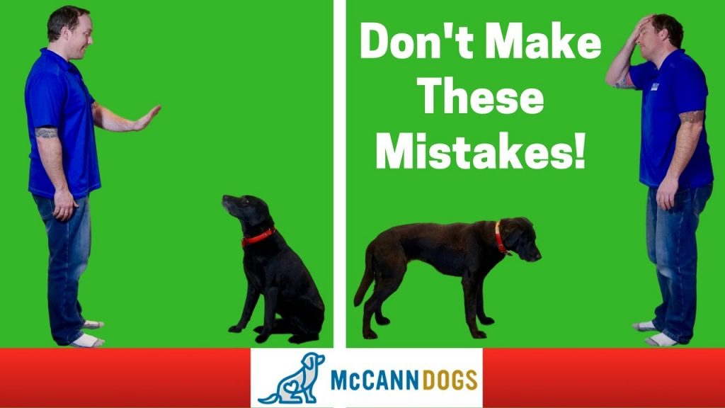 """Teaching A Dog To """"Stay""""- 3 Common Mistakes – Professional Dog Training Tips"""
