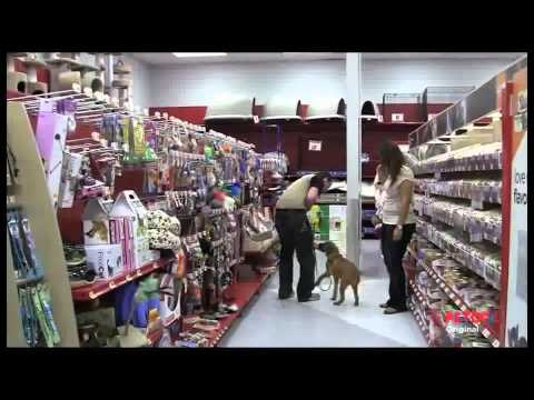 Petco Dog Training Class Overview