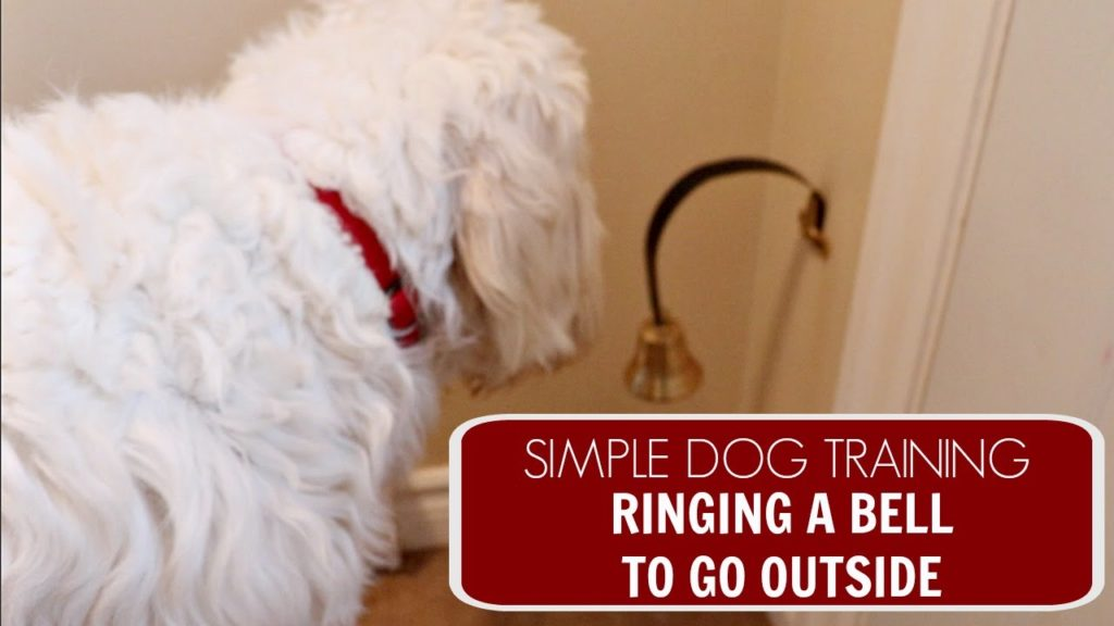 Easy Dog Training   Ringing a Bell to Go Outside
