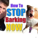How to Teach Your Dog Not to Bark,  Humanely and Effectively: 3 Things You Can Do Right Now