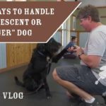 """The Top 3 Ways To Handle An Adolescent Or """"Teenager"""" Dog 