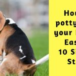 How To Potty Train Your Beagle Easily: 10 simple steps