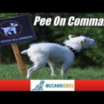 How To Teach Your Dog To Go Potty On Command - Professional Dog Training Tips