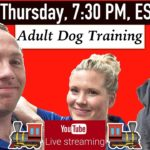 How To Train An Older Dog To Listen - Professional Dog Training Tips