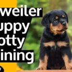 ROTTWEILER PUPPY POTTY TRAINING (TIPS FROM REAL DOG TRAINERS)