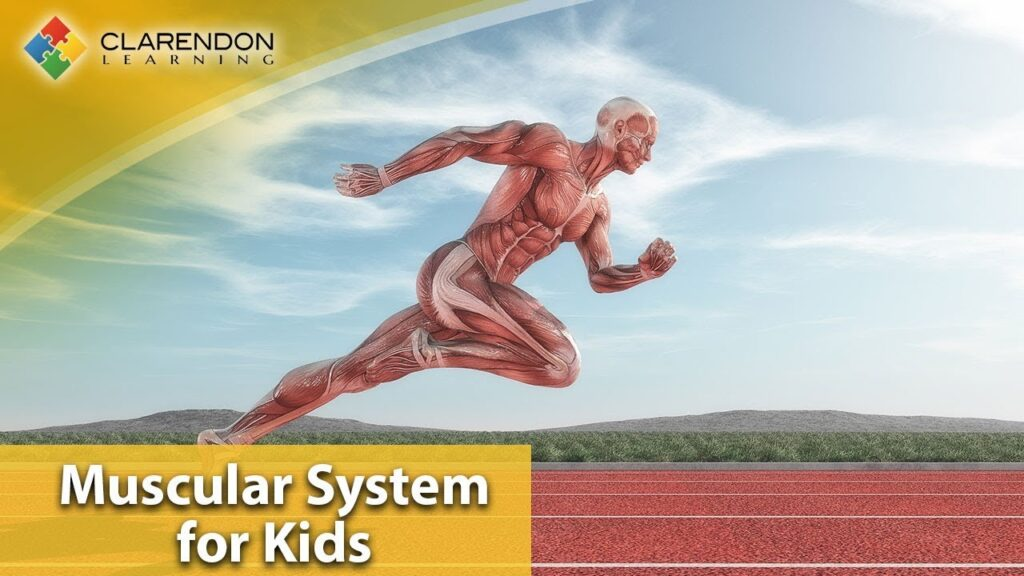 Muscles for Kids | A fun intro to the muscular system for kids