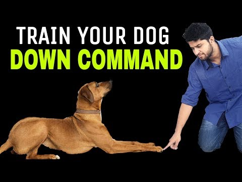 Train Your Dog DOWN Command | Dog Training In Hindi |