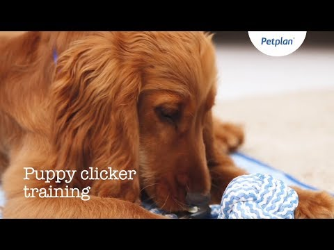How To Clicker Train Your Puppy | Puppy Training Tips | Petplan